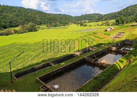 Irrigation system for paddy and fishery on mountain.
