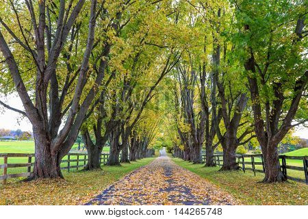 A beautiful tree lined country lane on an autumn morning Southwestern Ohio USA