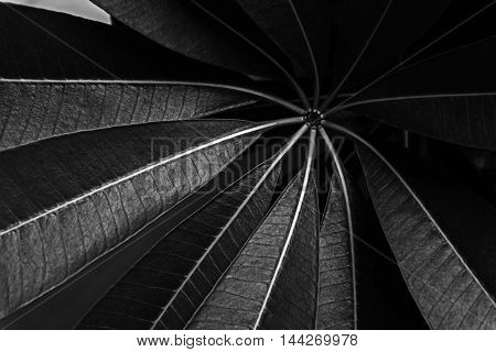 art of leaves pattern in monocrome for background.