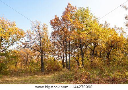Autumn Oaks Park. golden season, fall, red, autumn, bright,