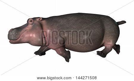 3D Rendering Hippopotamus On White