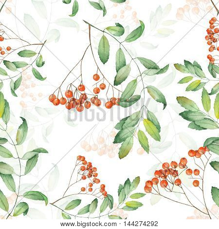 Seamless pattern of rowan painted in watercolor on a white background