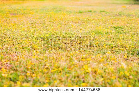 outdoor, focus, natural, park, green, gold, white, color, autumn, plant, day, brown, beauty, blur, leaf, yellow, bright, art, grass, beautiful, background, fresh, summer, shallow, nature, environment, abstract, season