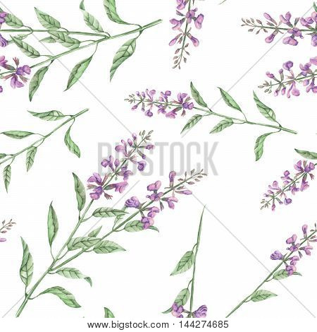 Seamless floral pattern with salvia flower, hand drawn in watercolor on a white background
