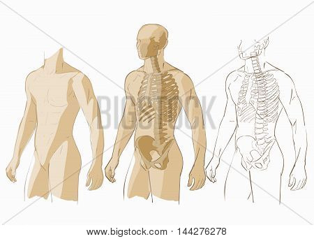 Human body parts skeletal man anatomy vector illustration isolated