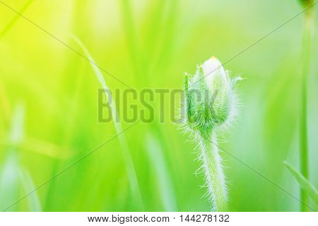 Natural flower outdoors bokeh background in green and yellow tones