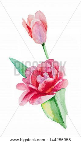 Pink, red tulip, bud, watercolor. Handmade greeting cards.