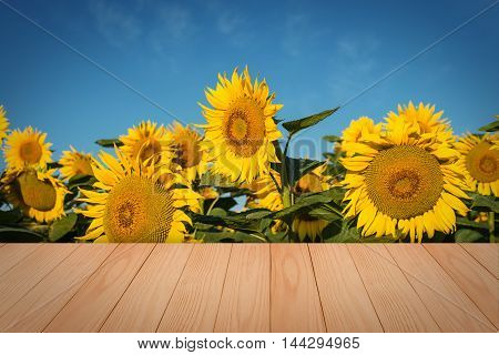 empty wooden table in sunflower field with blue sky. the background for product display template.