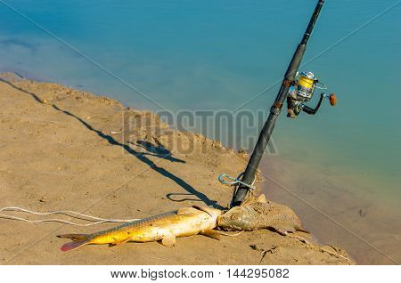 Fish Fishing