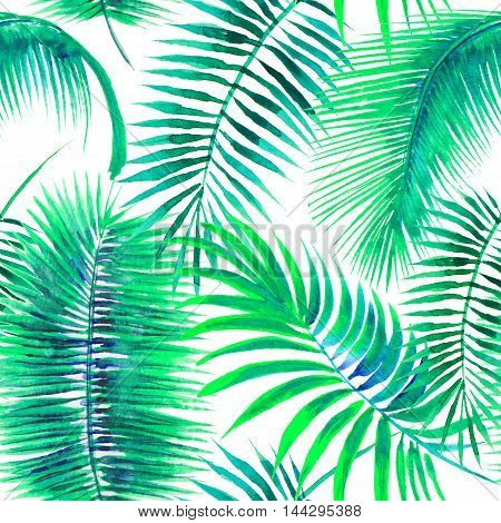 Palm leaves on the white background. Watercolor with tropical plants.