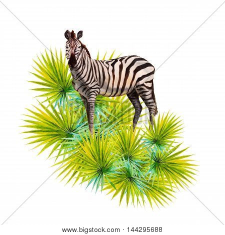 watercolor illustration of Zebra and jungle leaves.
