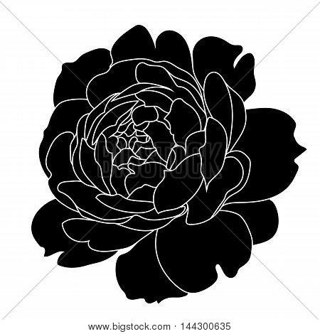Graphical black rose bud illustration. black rose, contour rose, bloom rose, decorative rose, isolate rose, blossom rose, monochrome rose. Vector.