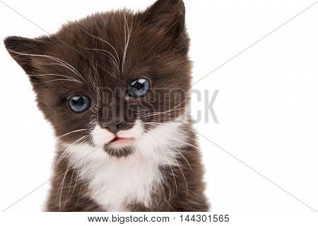 portrait of a kitten on a white background