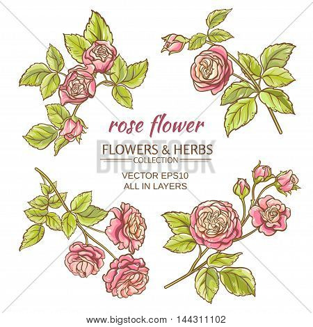set of pink roses elements on white background