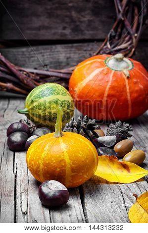 Three Decorative Pumpkins