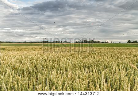 Air Balloons Over The Wheat Field
