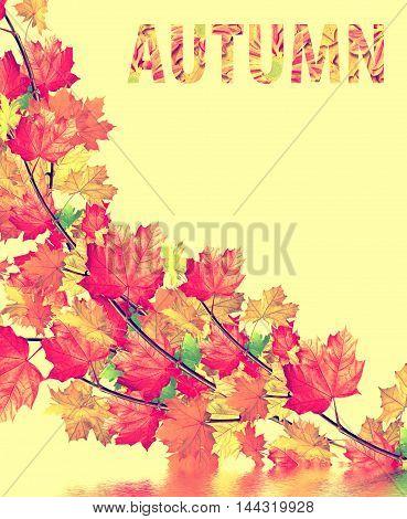 autumn leaves isolated on yellow background. foliage