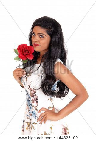 A gorgeous young Indian woman with long curly black hair standing in a dress halve length holding a rose isolated for white background.