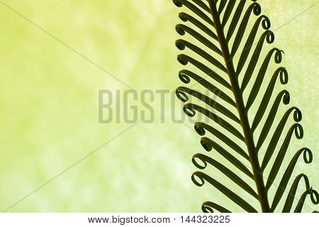 Young spring palm leaves on green background, for natural backdrops