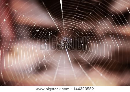 Closeup Photo Of Spider Web