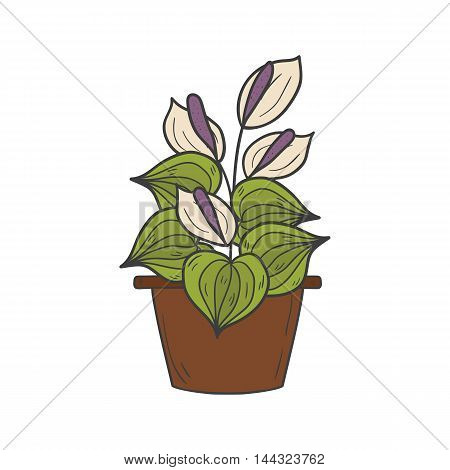 Vector illustration with cartoon hand drawn houseplant. Cartoon house plant interior design. Vector white flower. House plant hand drawn background. Flower shop logo emblem background concept