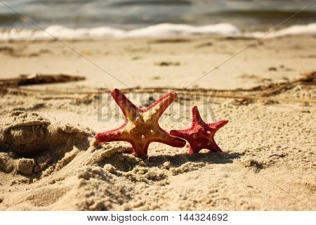 Two red starfish closeup on the yellow sand near the sea at the summertime.