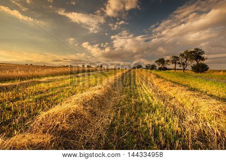 Wheat field after harvest. Moravian landscape Drvalovice.