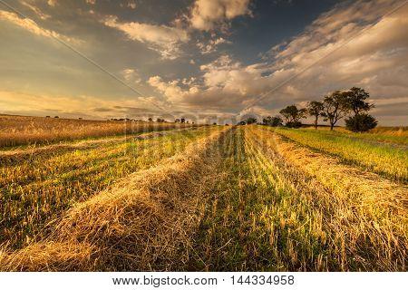 Wheat field after harvest. Moravian landscape Drvalovice.