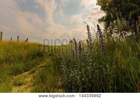 Path and meadow flowers Pteni. Moravian landscape.