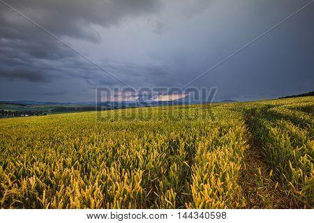 Dense clouds and grain field. Moravian landscape Lysice.