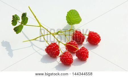 Raspberry, Razz, Fence, Stash
