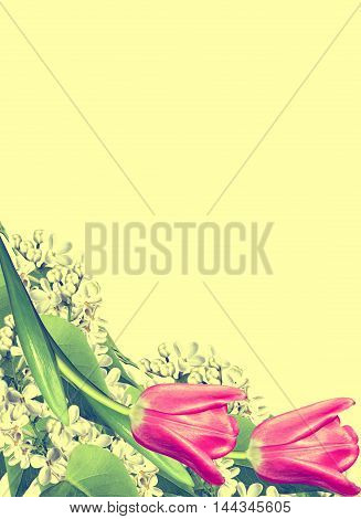 spring flowers lilac isolated on yellow background.
