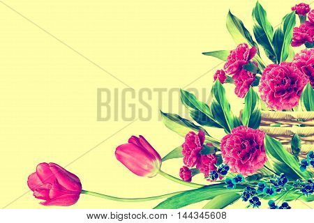 Holiday card. branch of beautiful flowers carnation. tulips