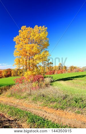 Autumn leaves on rolling rural country farmland fall colors