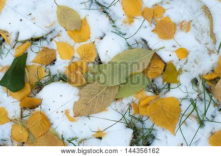 Leaves Autumn Snow. Texture