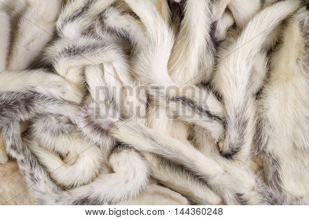 Texture, Background. Mink Fur Multicolored. Mink Tails