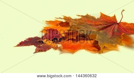 Texture, Background. Autumn Leaves.