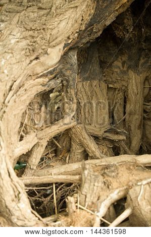 Texture, Background. Tree Roots