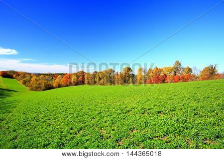 Autumn colors on rural wooded farm field fence line