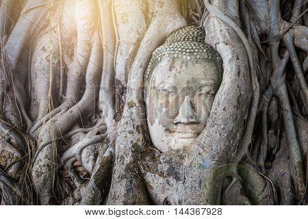 Head of Buddha statue in the tree roots at Wat Mahathat Ayutthaya Thailand.