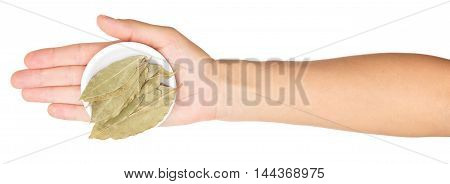 hand with bay leaves isolated on white