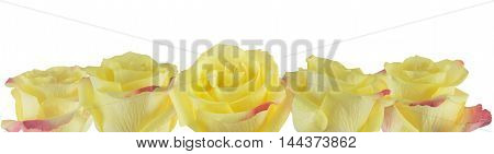 Rose petals yellow with pink edges on white background.