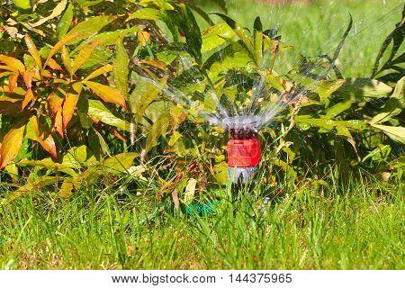 a water spray sprinkler as a tool to irrigate grass