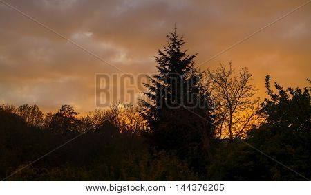 Beautifully illuminated orange clouds at sunset with the silhouette of trees