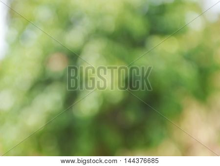 blurry background of plant in the garden