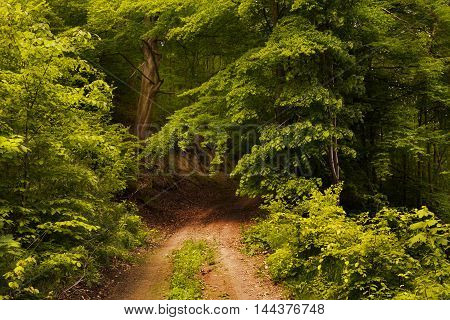 Nice view of the forest path over which tend branches with foliage of deciduous trees. Moravian countryside.