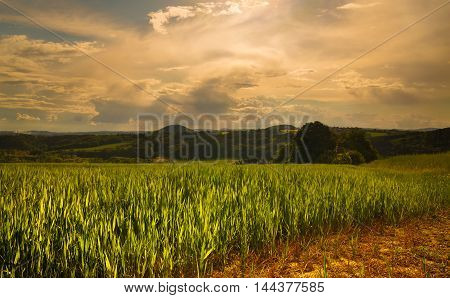 Beautiful view of the field with plants. In the distance are forests and thick clouds in the sky. Moravian landscape Doubravice.