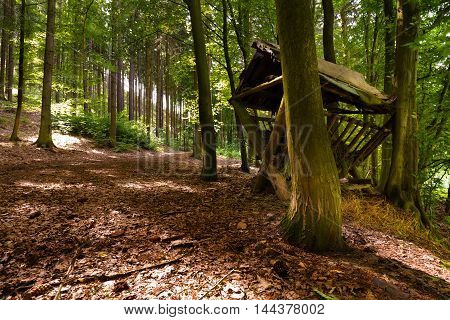 Forest path with feeding-rack Boskovice. Moravian landscape.