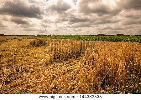Ripening grain fields and dense clouds. Moravian landscape Boskovice.