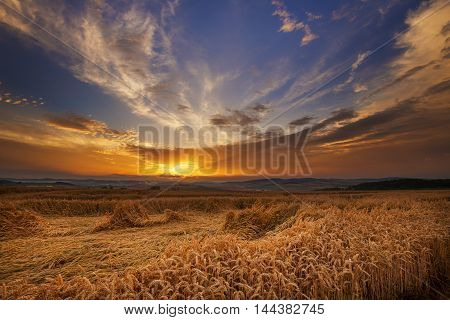 Magic sunset and ripened grain. Moravian landscape Boskovice.